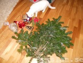 julkrans innan