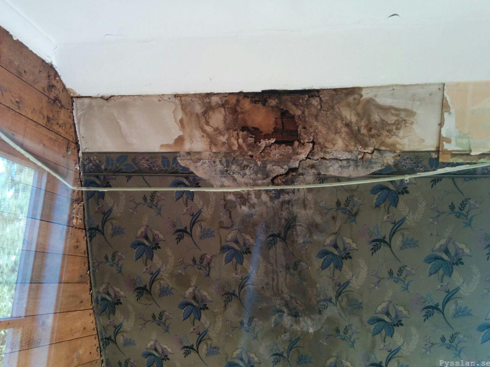 Fuktskada svamp mögel 20-talsdröm 20-talshus renovering pysslan blog