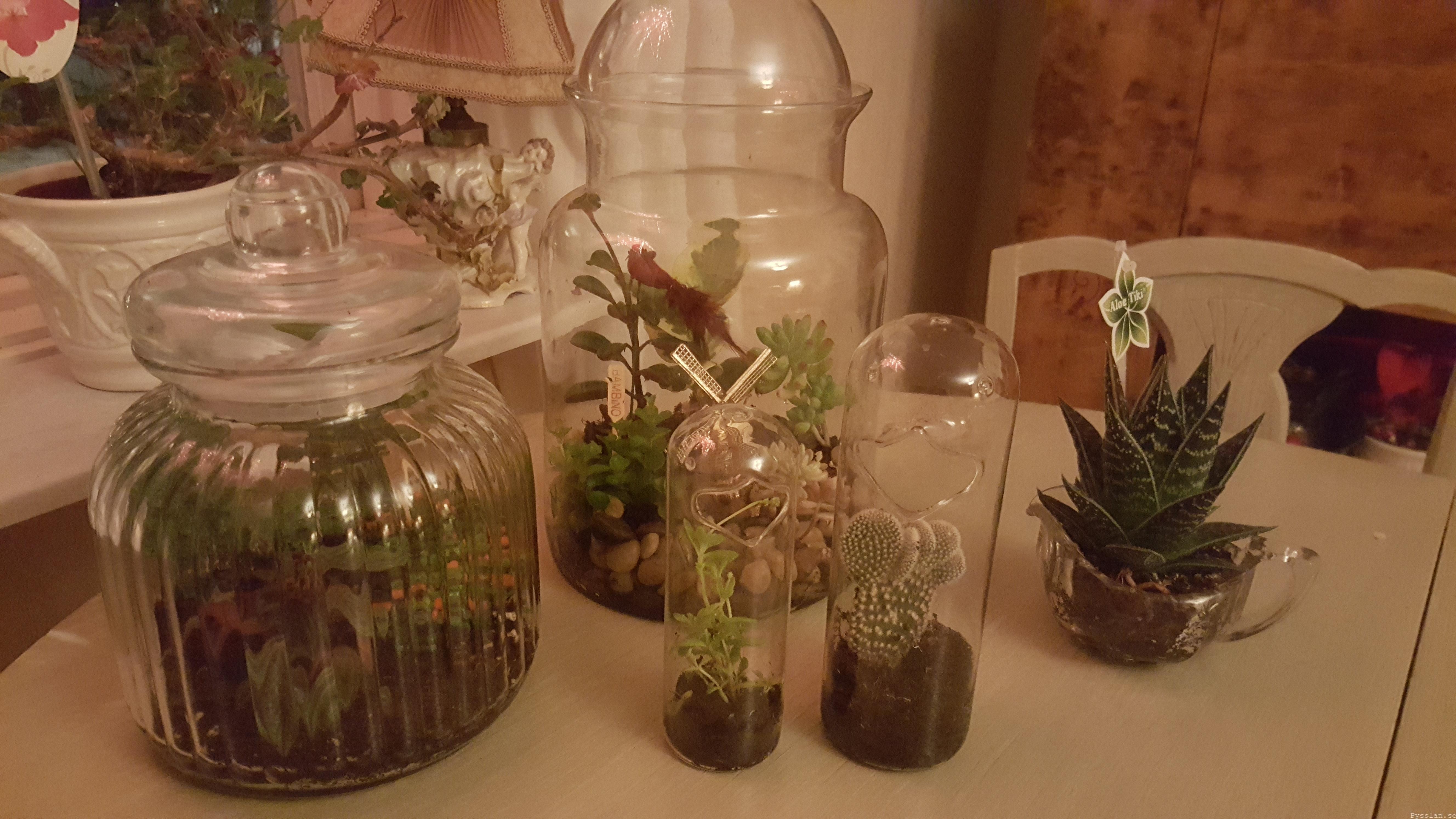 liten växtvärld glöm att vattna pysslan blogg alla växter